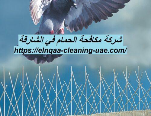 شركة مكافحة الحمام في الشارقة |0545667540|مكافحة طيور