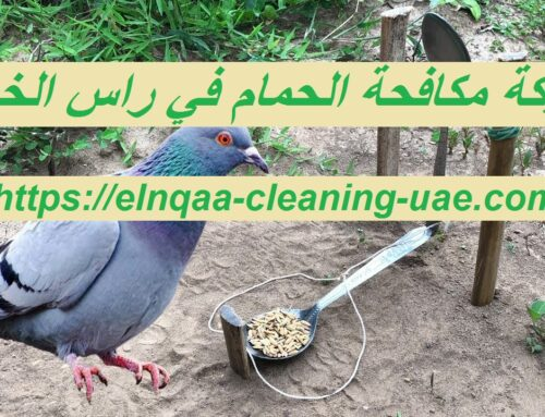 شركة مكافحة الحمام في راس الخيمة |0545667540|ارخص الاسعار